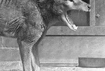 Cryptozoology&animals