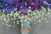 fialova svadba