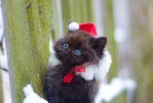 Kitties*