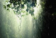 Weather / The weatherman says its.... / by Sara Freeman