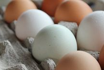 Eggs, Eggs & Eggs