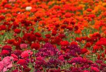 Flowers / by Mikaela Panayiotou