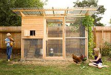 Poulailler  / Poulailler, poules, agriculture