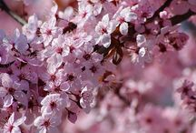 virágok,fák