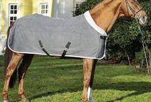 Koně nákupy