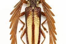 insectos guayones