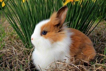 bunny love / buns buns and more buns!!!!!