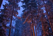 Camping / by Olivia Long