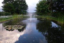 Wildflower Fountain