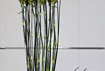 floristika