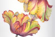 Tulips 2 draw