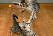 Expressiva cats