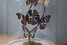 vlinders stolp