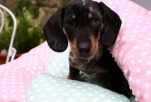 Puppy life !