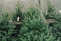 Christmas & Holiday