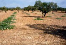 Φυτά / Plants / Piante / Η PlantsAndSeeds διαθέτει φυτά κάππαρης και κρίταμου και σας βοηθάει να στήσετε την δική σας καλλιέργεια