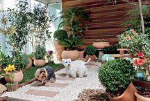 Casa que tem cachorro