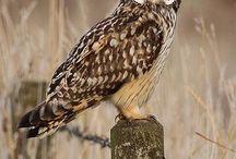 Gotta love owls / by Mandy Mount