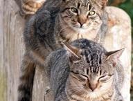 Cats & Kittens / by Barbara B