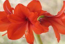 Grădină / Grădini, plante, flori...