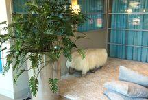 Flowers & Plants / Plants garden home Interior styling