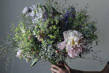 Plants / Květinky