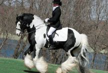 Horses / by Hadeel Abdelmageed