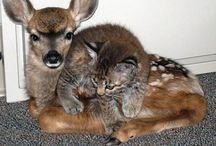 Unlikely Animal Friends / Please feel free to pin as many as you like. / by Linda Elliott