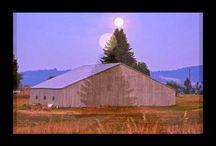 Super Moon - Nature's Christmas Tree / by Five Stars of Scandinavia, Inc.
