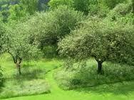 natuurlijk groen met strakke paden