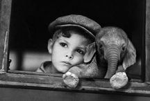 animals and babies  / by Lindsay Schommer