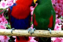 Parrotts! / by Amber Powers