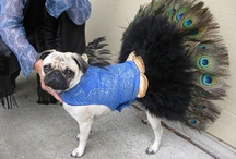 Must LOVE Dogs, especially Chinese Pugs!! / by Bobbi Hinsch