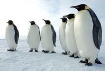 Penguins / by Ellen Bellenot