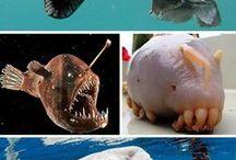 Furcsa állatok