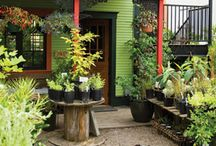 Urban Homesteading / by Susie Somday