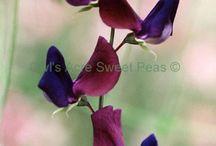 giardino in viola e blu
