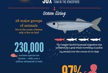 Факты о воде и океане