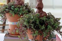 Vasos - decoração