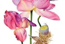 ART-Botanicals