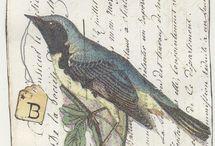 birds. giorn