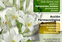 la farmacia en la naturaleza