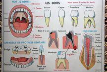 Les dents 2