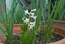 FLOWERS / Fiori e piante da giardino