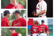 Cardinals / by Stephanie Eldridge