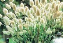 Planter  - Gress