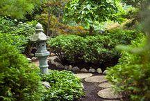 Backgarden Zen Garden