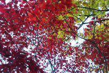Kyoto / My life in Kyoto, Japan.