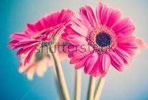 Flowers / A flower, sometimes known as a bloom or blossom, is the reproductive structure found in flowering plants. / by Shutterstock