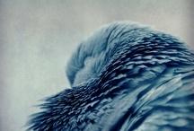 Borrowed Feathers / by Rubén Egea Amador